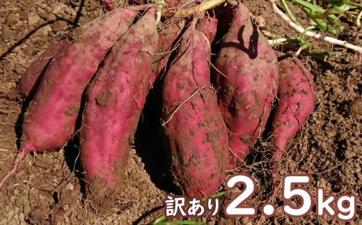 TA004【訳あり】西山きんとき芋(さつまいも)2.5kg