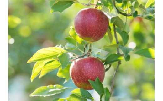 01D-137 しもせりんご村の完熟りんご 3㎏
