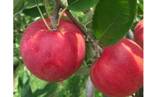 A-66 二戸産りんご ジョナゴールド 3キログラム