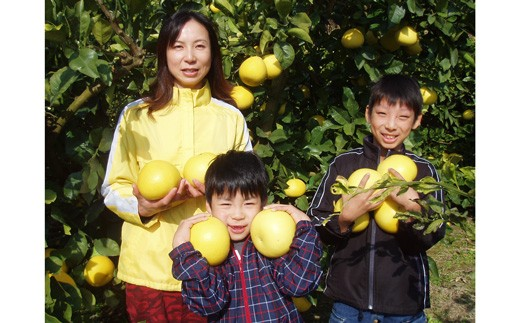 中西農園の土佐文旦 10kg(家庭用)