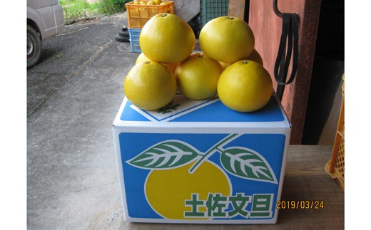 まる博農園の土佐文旦 5kg(家庭用)