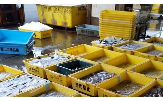 鴨川漁港での入札風景