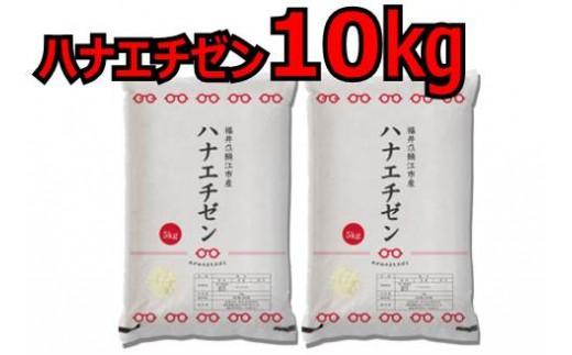 【令和元年産 新米】ハナエチゼン 10kg 受付開始[D00344]