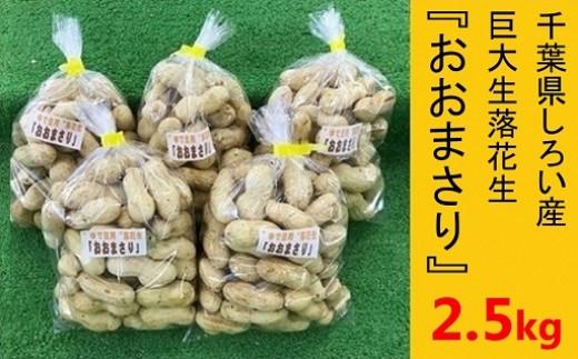 落花生 おおまさり (生) 2.5kg