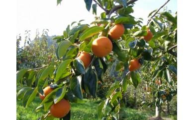 一心農園の富有柿 家庭用 約1.8㎏