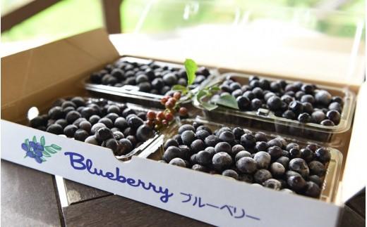 【農薬・化学肥料不使用】南小国産・摘み立てそのまま!冷凍ブルーベリー1kg