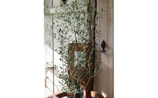 愛の木「オリーブ」<LotusGarden>