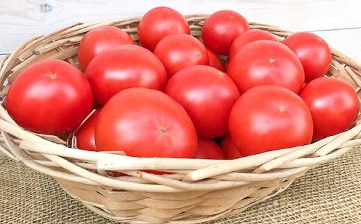 【先行受付!!】12月~6月毎月発送 プレミアムフルーツトマトの定期便 7回コース H004-047