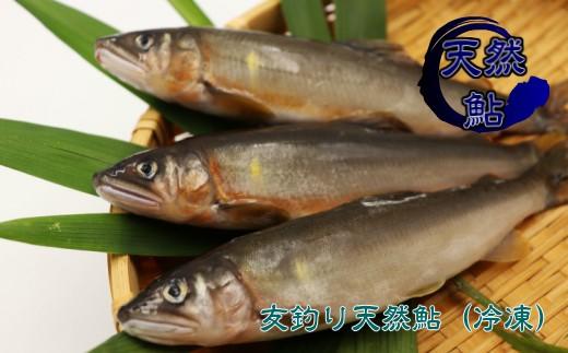 京都の料亭絶賛!鮎屋仁淀川の友釣り天然鮎1kg(10-20尾)D-3
