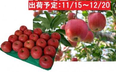 [№5645-1248]木村りんご園のサンふじ約5kg 14~18玉程度 青森県鰺ヶ沢町産