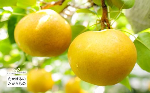特産品番号312 新田果樹園の梨 愛宕(5kg)