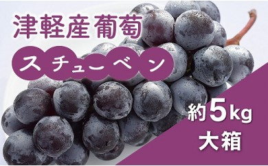 津軽産葡萄スチューベン約5kg(大箱)
