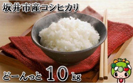 [A-1011] 令和元年新米 坂井市産コシヒカリどーーんっと10kg