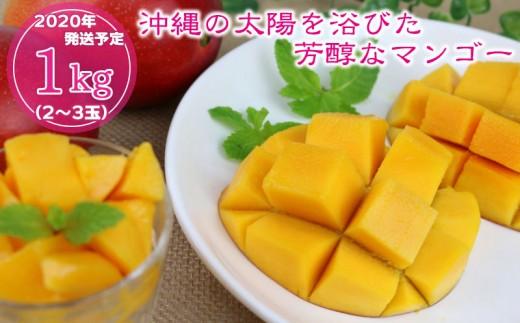【2020年発送】沖縄の太陽を浴びた芳醇なマンゴー 1kg