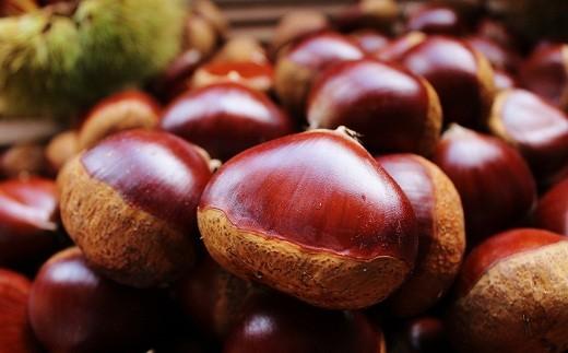 豊かな食味と色つやの良さ、丹波くりは全国の市場でも最上級品として評価されています。
