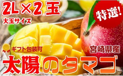 <宮崎県産 太陽のタマゴ 2玉 桐風木箱入り>最上級完熟マンゴー 大玉サイズ【C81】