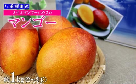 【2020年発送】ミナミマンゴーハウスのマンゴー約1kg