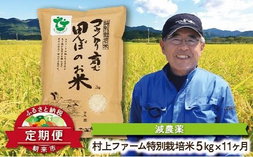 K-2-B 【限定26】定期便 特別栽培米コシヒカリ5㎏×11ヶ月【村上ファーム】