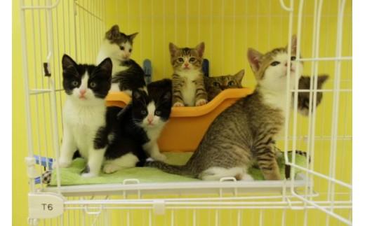 【お礼の品なし】豊田市動物愛護事業