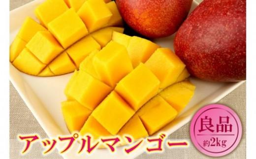 【2020年発送】くがに市場の産直アップルマンゴー約2kg【良品】