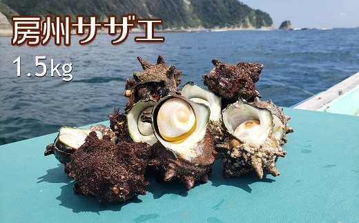 1-138【獲れたて直送の海の幸】房州サザエ 1.5kg!