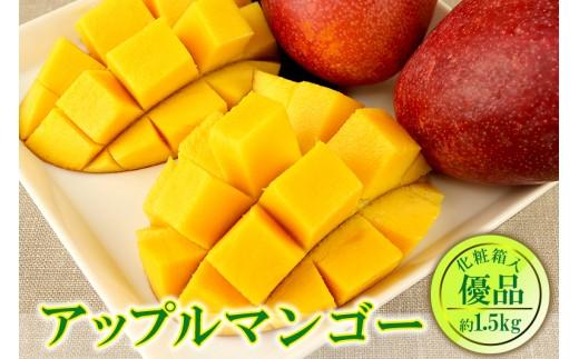 【2020年発送】くがに市場の産直アップルマンゴー約1.5kg【優品】