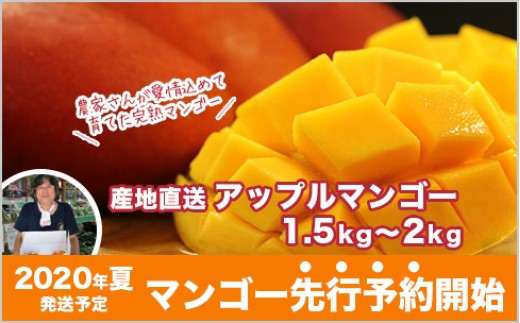 KN05:数量限定!産地直送アップルマンゴー 1.5kg〜2kg