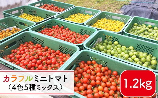 【4色5種MIX】カラフルミニトマト<りんたろうファーム> [DAE001]