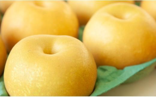梨詰め合わせ<合計約3.0kg:西ノ村果樹園> 31-SNK01