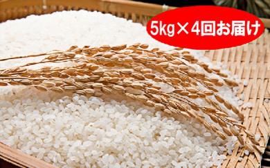 [№5755-0098]特別栽培米「彩のきずな」20kg(5kg×4回のお届け)