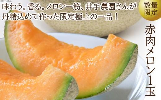 T405 【数量限定】赤肉メロン1玉(1.6kg以上)【500pt】