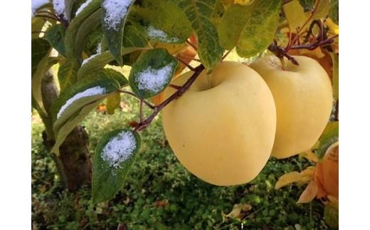 19A-4  二戸産りんご はるか 3キログラム