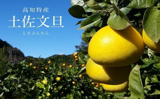 [1185]植田農園の土佐文旦 5kg(ご家庭用)