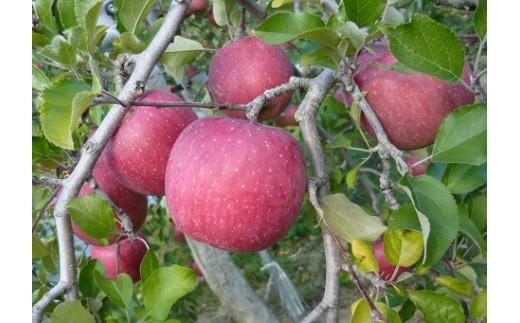 17A-4  二戸産りんご サンふじ 5キログラム