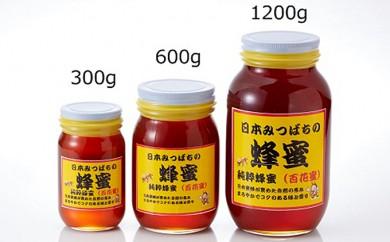 [№5634-0278]日本みつばちの蜂蜜600g