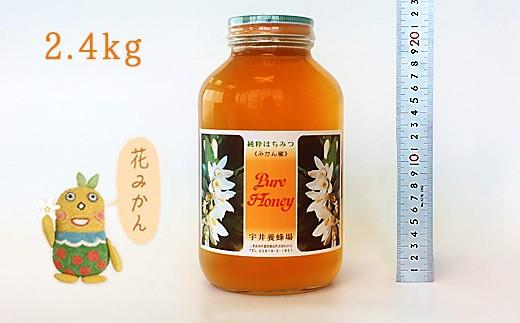 BA016-L花みかんハチミツ