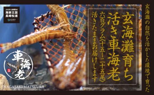 【C0-012】新松浦漁協 活きくるまえび600g