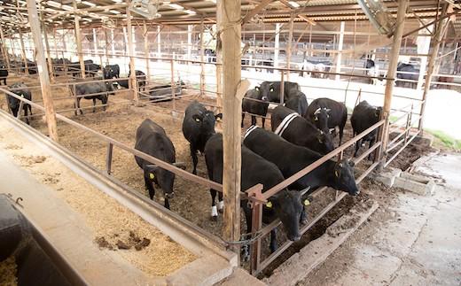 日当たりのいい清潔感たっぷりの牛舎で育てられている『なかやま牛』