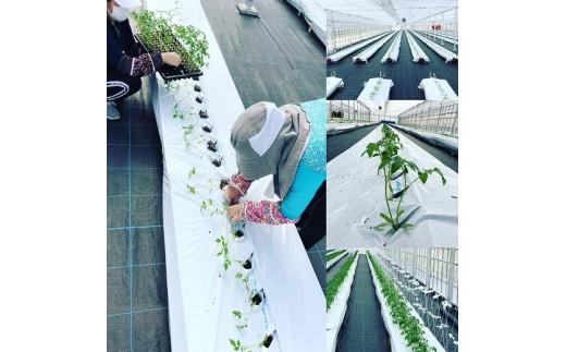 丁寧に苗を植え、毎日手入れを行っています