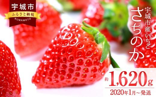宇城市産 いちご「さちのか」 270g×6パック 合計1620g 果物
