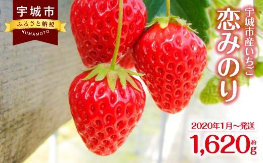 宇城市産 いちご「恋みのり」 270g×6パック 合計1620g 果物