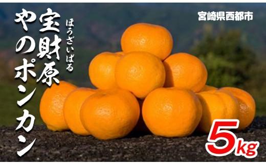 【先行予約】宮崎県西都産 宝財原「やのポンカン」 5kg<1-119>