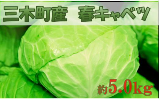992 三木町産春キャベツ