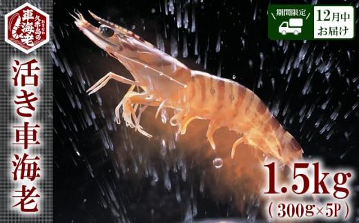 """【2019年12月中お届け】""""活き""""⾞海⽼:1.5kg(300g×5P)"""