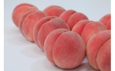 BP012-NT♪フルーツ王国山形♪白桃5㎏