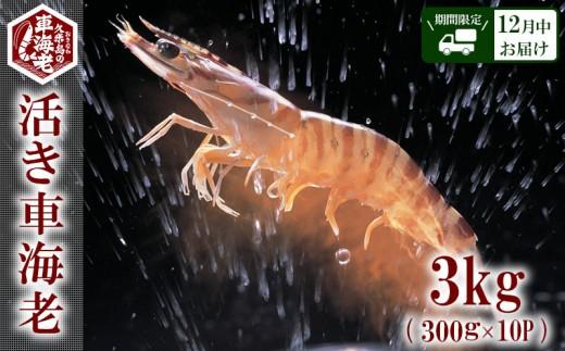 """【2019年12月中お届け】""""活き""""⾞海⽼:3kg(300g×10P)"""