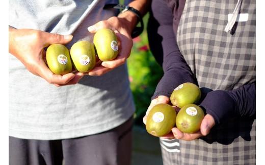 """収穫したてのキウイ。収穫後に""""追熟""""を経ることで、果肉がやわらかくなり、芳醇な甘味が生まれます。"""