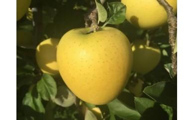 【全4回】弘前りんご定期便 黄金(こがね)色コース