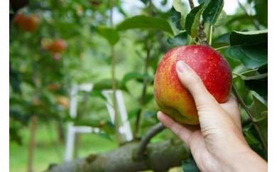 AW13 葉とらずりんご