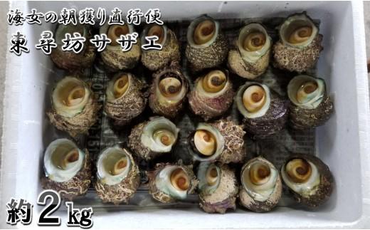 [A-6004] 海女の朝獲り直行便 東尋坊サザエ 2kg